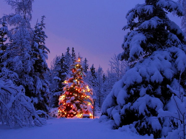 52 Beautiful Merry Christmas Pictures to Share
