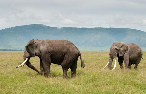 Serengeti National Park 50th Birthday Ideas