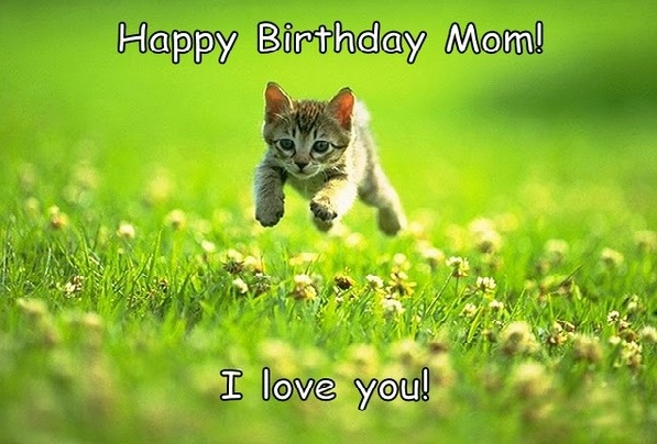 funny Happy Birthday meme for Mom| Birthday cat meme, cute cat meme for birthday