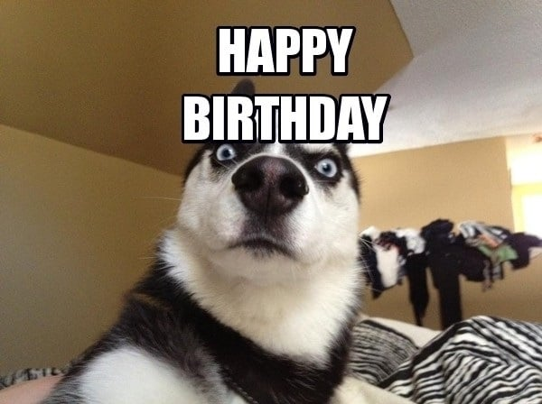 100 Ultimate Funny Happy Birthday Meme's My Happy Birthday Wishes