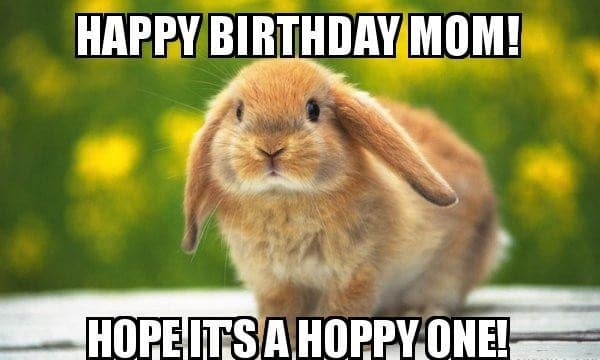 Funny Happy Birthday Meme Animal