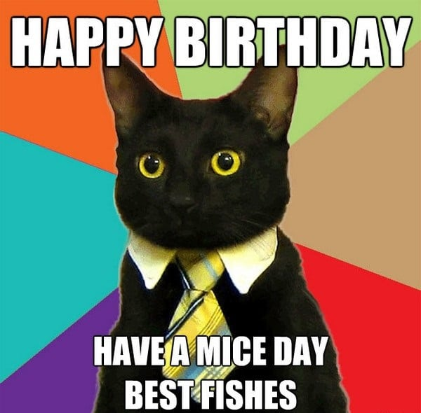Funny Happy Birthday Meme Cat