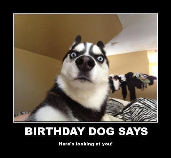 Funny Meme Birthday Wishes : Ultimate funny happy birthday meme s my