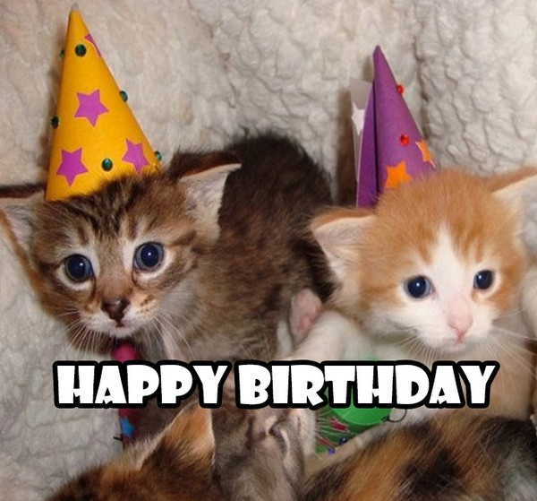 Happy Birthday Cute Cats Meme