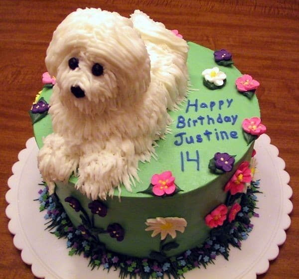 Birthday Cake For Dogs Calgary