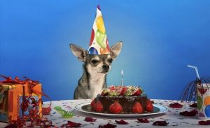 Cute Birthday Cake For Dogs