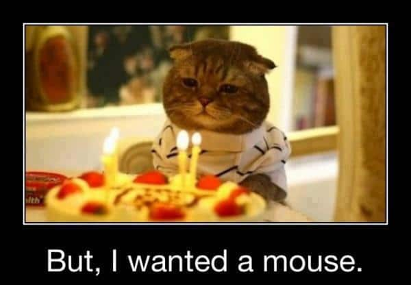 25 But I Wanted A Mouse